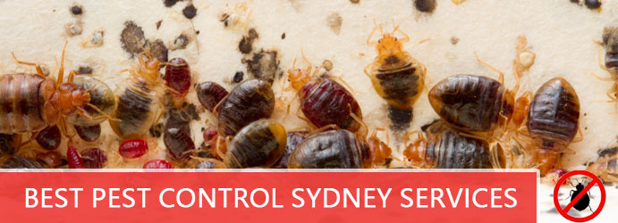 Best Pest Control Sydney Services
