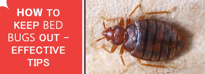 How to Keep Bed Bugs Out – Effective Tips
