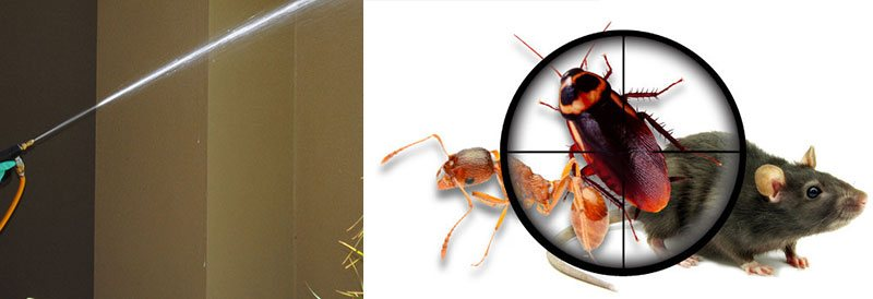 Best Pest Control Forestville