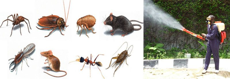 Commercial Pest Control Forest Lodge