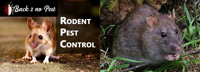 Rodent Pest Control