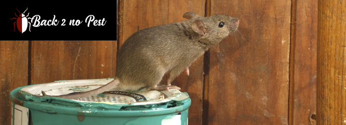 Rodent Control Treatment