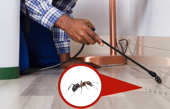 Ants Pest Control Clearview
