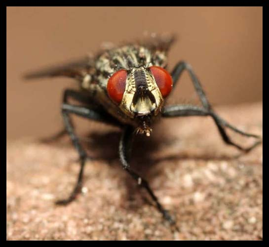 Flying Insects Control Fryerstown