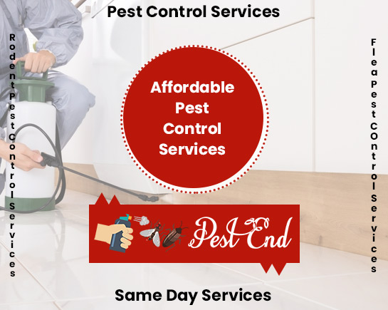 Affordable Pest Control Services Boomer Bay