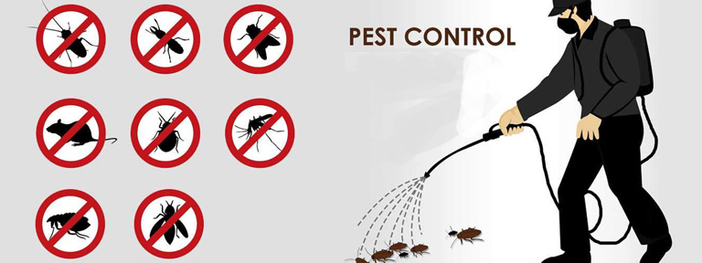 Professional Assistance of Pest Control Services