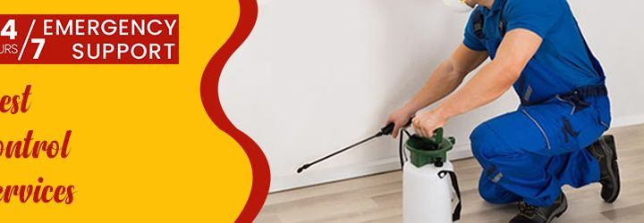 What are The Dangers of DIY Pest Control Treatment?