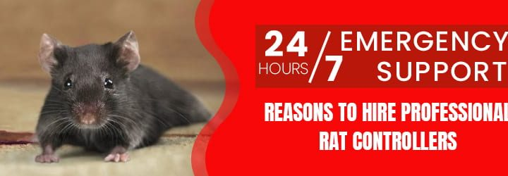 Why Hire Professionals For Rat Control Service?