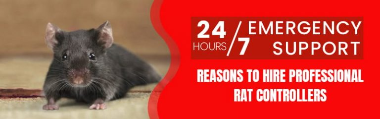 Reasons To Hire Professional Rat Controllers